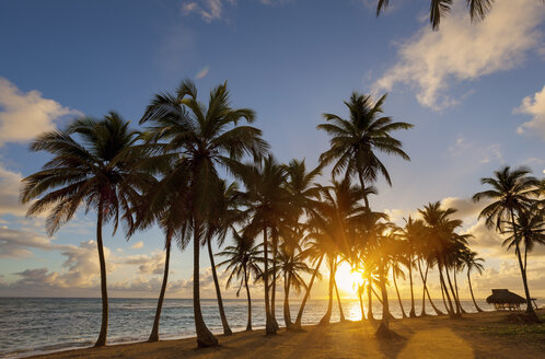 Dominican Rebublic, Tropical beach with palm trees at sunset - HSIF000481