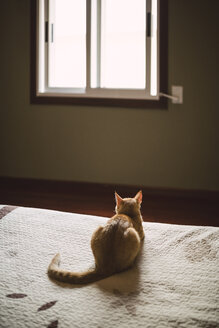 Back view of cat lying on bed looking at window - RAEF001210
