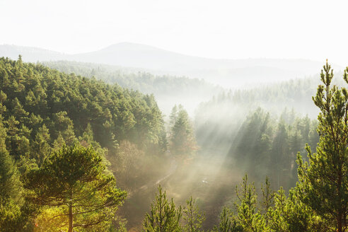 Germany, Rhineland-Palatinate, Palatinate Forest-North Vosges Biosphere Reserve on a hazy day - GWF004755