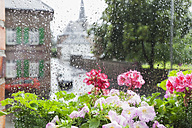 Germany, Cologne, heavy rain in summer, summer flowers in flower box and rain drops on windowpane - GWF004758