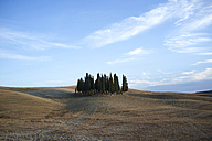 Italy, Tuscany, Val d'Orcia, group of cypresses - PAF001724