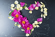 Peony and rose petals in heart shape - MYF001528