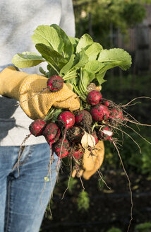 Woman holding bunch of radishes in a garden - DEGF000830