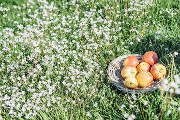 Apples on flower meadow - MJF001950