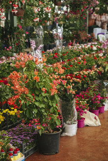 Turkey, Istanbul, Flowers at the marketplace - BZF000307