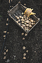 Potatoes in wooden box - DEGF000842