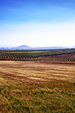 Spain, Andalusia, Field of cereal crops, olive groves - SMAF000479
