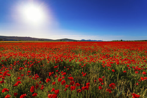 Spain, Andalusia, Villanueva de Trabuco, poppy field - SMAF000497