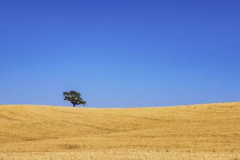 Spain, Andalusia, Barley field and tree - SMAF000509