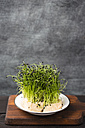 Rock chives, chive sort from east asia - MYF001637