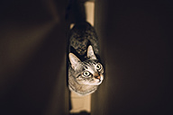 Tabby cat in a cardboard box - RAEF001255
