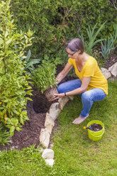Woman planting marguerite in garden - WDF003678