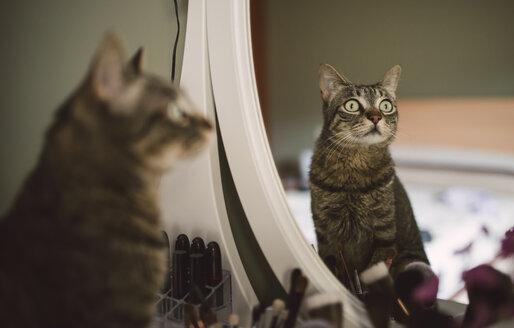 Mirror image of tabby cat sitting on vanity - RAEF001257