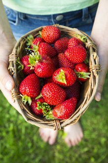 Girl's hands holding wickerbasket of strawberries - LVF005079