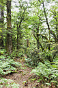New Zealand, North Island, Te Urewera National Park, trail through rainforest - GWF004794