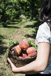Woman holding basket with peaches in orchard - DEGF000869