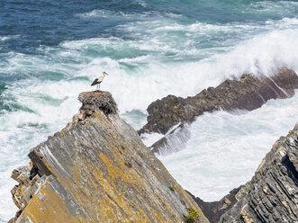 Portugal, Stork nesting at Parque Natural do Sudoeste Alentejano e Costa Vicentina - LAF001674
