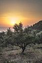 Greece, Kalamata, olive trees, sea and sunset - DEGF000898