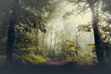 Forest and path against the sun - DWIF000745