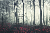 Deciduous forest in autumn, morning mood - DWIF000751