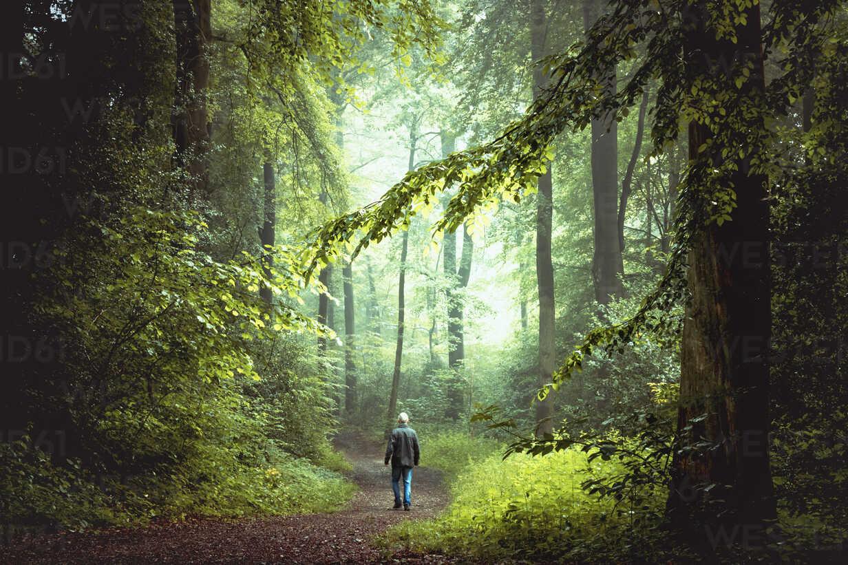 Man walking on forest track in morning light - DWIF000754 - Dirk Wüstenhagen/Westend61
