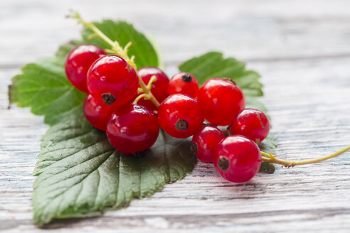 Red currants on a leaf, close-up - SARF002806