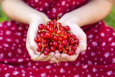 Hands of girl holding red currants - SARF002809