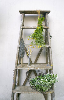 Ladder with wire, pruner, ground elder and common buttercup - GISF000224