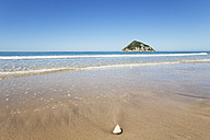 New Zealand, East Cape, Anaura Bay, Beach with Cooks Turban Shell, Cookia sulcata - GWF004809