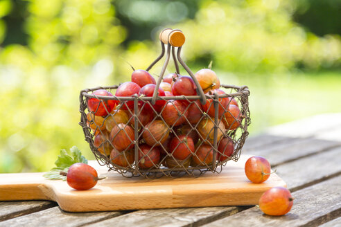 Wire basket of red gooseberries - SARF002821