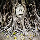 Thailand, Ayutthaya, head of sandstone Buddha between tree roots at Wat Mahathat - GIOF001289