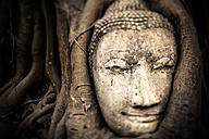 Thailand, Ayutthaya, head of sandstone Buddha between tree roots at Wat Mahathat - GIOF001292