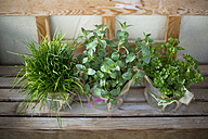 Pots of chives, mint and frizzy parsley - MAEF011889