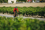 Spain, Andalusia, Jerez de la Frontera, man on a bicycle on a road between vineyards - KIJF000618