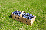 Splint basket of blueberries on a meadow - KLRF000436