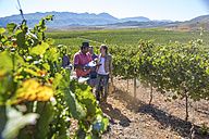 People walking through vineyard - ZEF009346