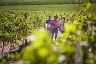 People walking through vineyard - ZEF009352