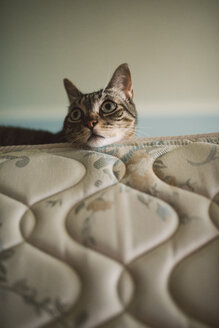 Portrait of tabby cat at home - RAEF001316