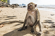 Thailand, Ao Nang, macaque sitting on the beach - JATF000902