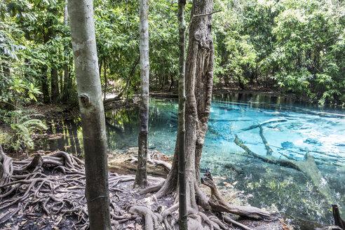Thailand, Krabo, Emerald Pool in the rainforest - JATF000908