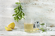Glass of fresh peppermint tea - ASF005962