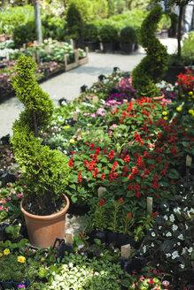 Flower shop - BZF000320