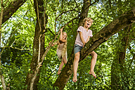 Little boy and his sister climbing on a tree in the forest - TCF005033