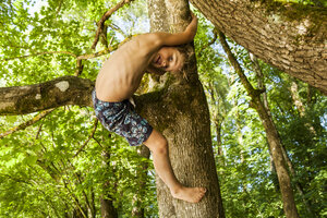 Little boy climbing on a tree in the forest - TCF005048