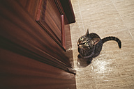 Tabby cat waiting in front of a closed door at home - RAEF001335