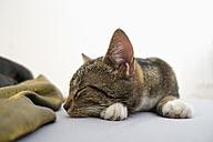 Tabby cat sleeping on bed - NDF000587