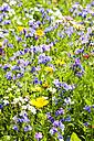 Field of flowers - CSF027511