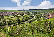 Escherndorf near Vollkach, Nordheim am Main, Main river loop - SIEF007077
