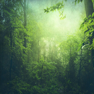 Deciduous forest in summer, early-morning haze - DWIF000768