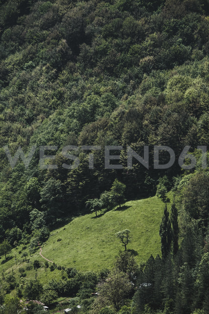 Bulgaria, Trun, forest - BZF000343